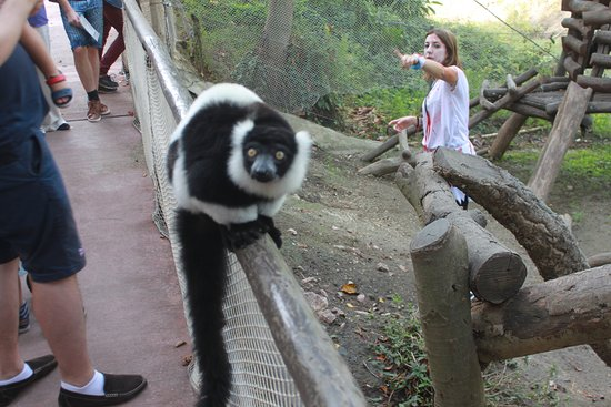 Selwo Aventura: Be in the lemur cage