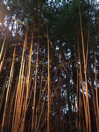 Parco Botanico Villa Rocca: Bamboo