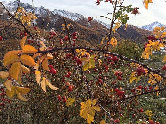 Pragelato, Italy: Impressioni d'autunno in Val Troncea