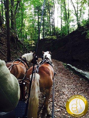 Fuschl am See, Austria: Kutschfahrt mit hoteleigenen Pferden
