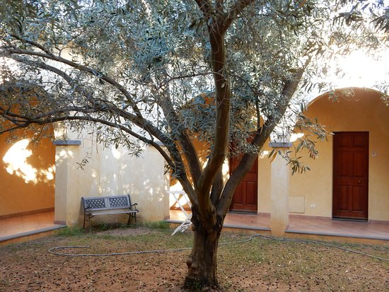 Tanca Irde: The center courtyard complete with olive tree.