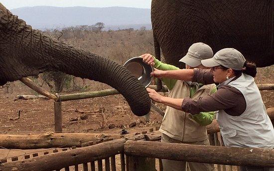Bayete Zulu: Have you ever fed an elephant?