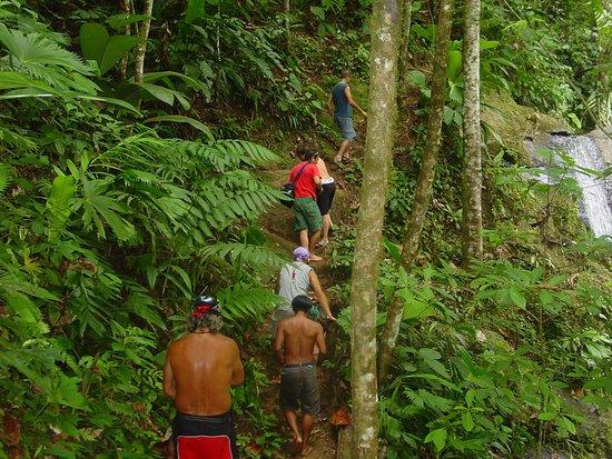 Kekoldi Indigenous Reserve : Caminata por la selva camino a la Catarata de Volio !!!