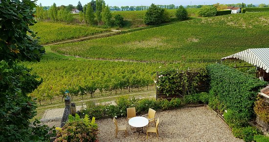 Neac, France: Outdoor sitting area and vineyards