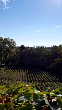 Neac, France: Beautiful vineyards