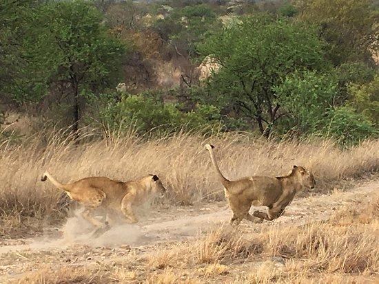 Gweru, Zimbabue: photo2.jpg