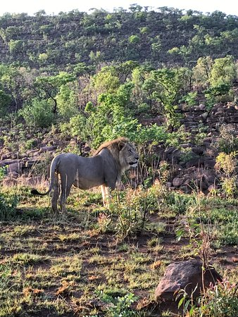 Welgevonden Game Reserve, Sudáfrica: safari