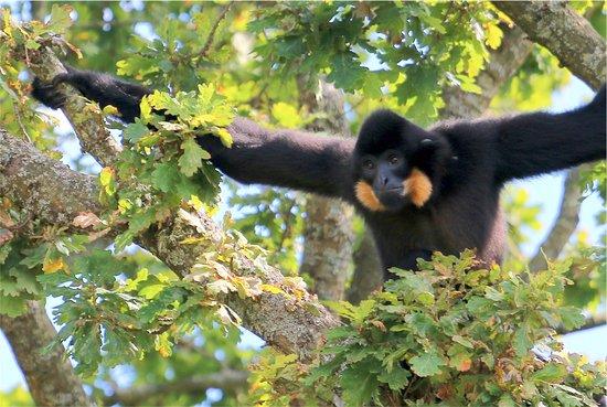 Monkey World照片