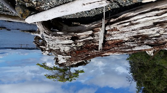 Malcolm Island, كندا: 20160902_144622_large.jpg