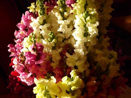 Holiday Inn Express Mesa Verde-Cortez: Fresh snap dragon flowers in lobby