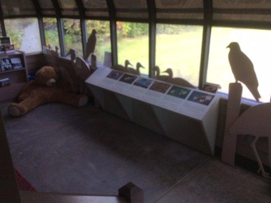 Chesapeake Exploration Center : Bird exhibit