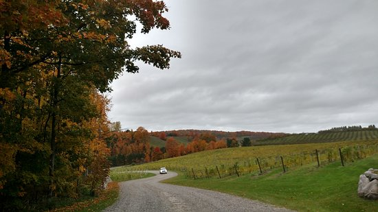 Lake Leelanau, MI: View down the winding driveway