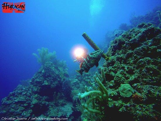 Long Caye, Belize : Grouper Pint Dive Site