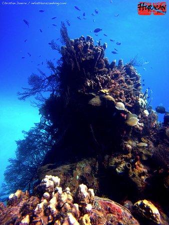 Long Caye, Belize: The Aquarium
