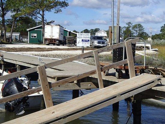 Daisey's Island Cruises: Tom's Cove Aqua Farm