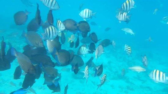 Paradise Dive Shop: nice