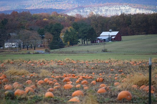 Salisbury Mills, Estado de Nueva York: Fall in the area