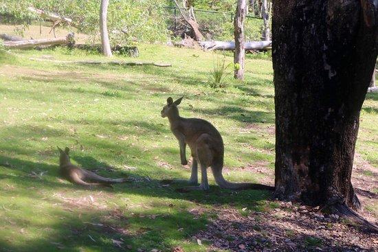 Rockhampton Botanic Gardens: photo0.jpg