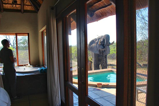 Sabi Sand Game Reserve, Νότια Αφρική: Elephant drinking water from our private pool!