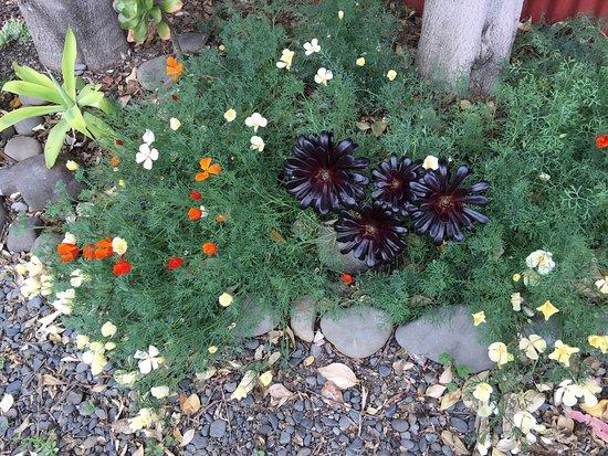 Cobden Garden Bed and Breakfast: photo1.jpg