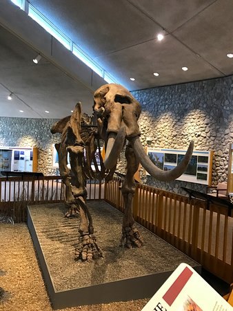 Imperial, MO: Mastodon in the museum-- very cool!