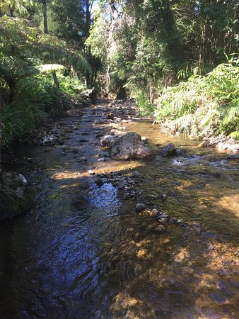 Driving Creek Villas: photo9.jpg
