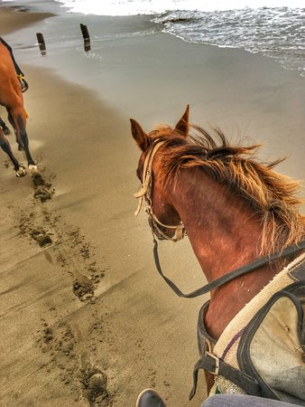 Daly City, CA: Horse riding on the beach