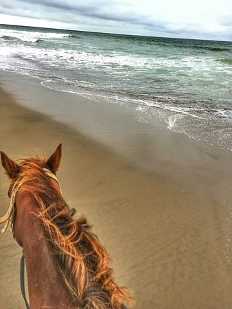 Daly City, CA: Horse and a beach