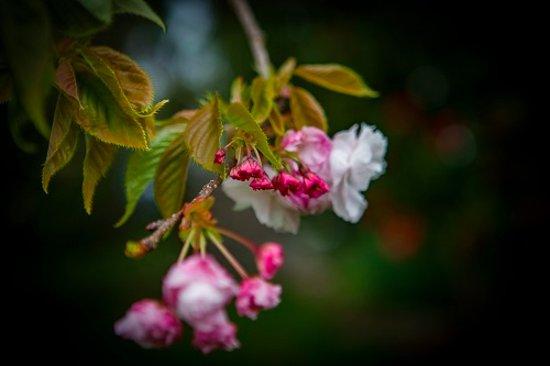 Clover Downs Homestead: Gorgeous flowers everywhere