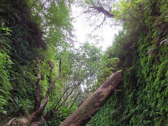 Brookings, OR: 시원한 숲