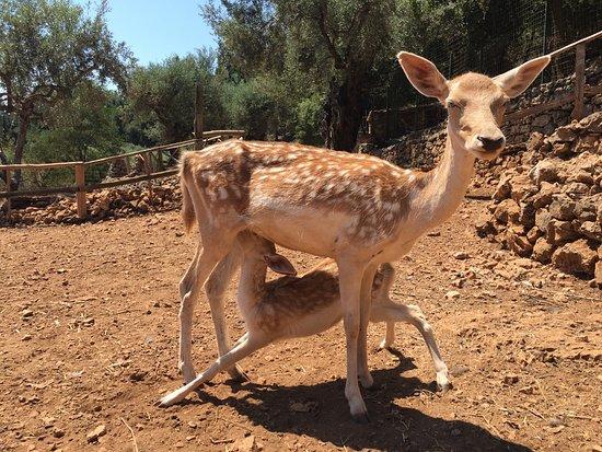 Volimes, Hellas: Een van de dieren die je er ziet.