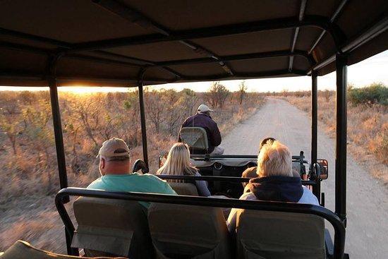Honeyguide Tented Safari Camps: Private game drive at Honeyguide