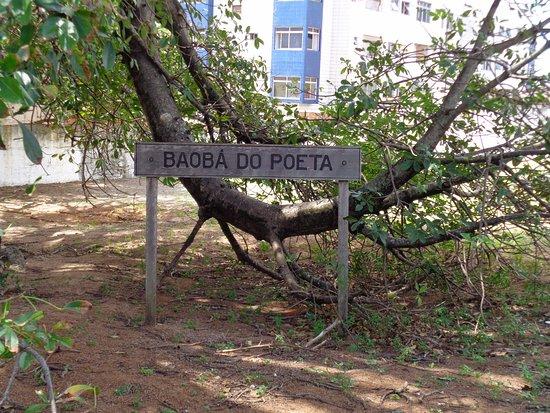 Baoba do Poeta