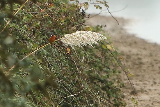 Hayle, UK: Kingfisher