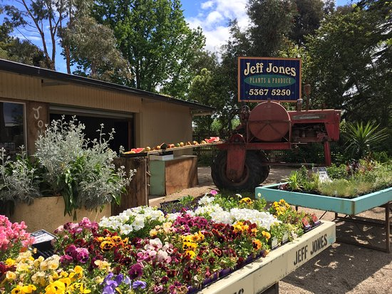 Jeff Jones Plants and Produce