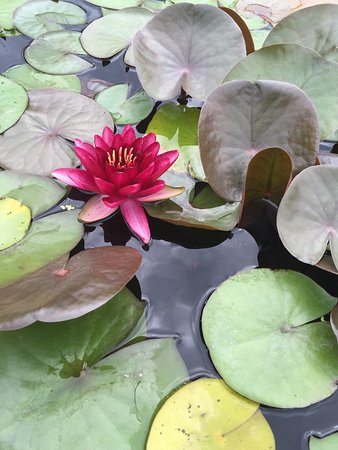 The Arboretum at Penn State: photo5.jpg