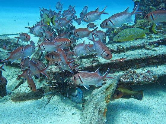 Simpson Bay, St Martin / St Maarten: nasty lionfish hanging around