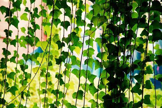 """Nature Huset """"Cocina de Campo"""" - Terrace"""