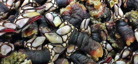 Negreira, España: Percebes de Costa da Morte