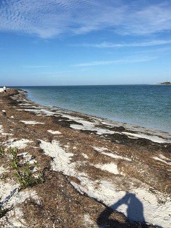 Caladesi Island State Park Photo