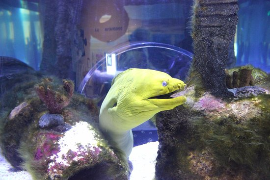 Oregon Coast Aquarium 이미지