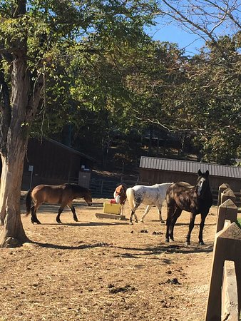 Swoope, Βιρτζίνια: 3rd visit to North Mountain Horse Ranch..check these out