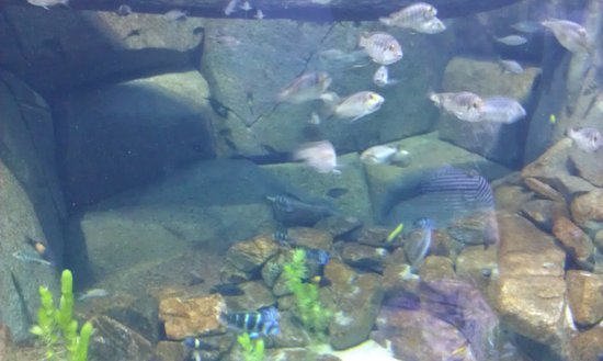 National Aquarium Denmark : ... of Den Bla Planet, National Aquarium Denmark, Copenhagen - TripAdvisor