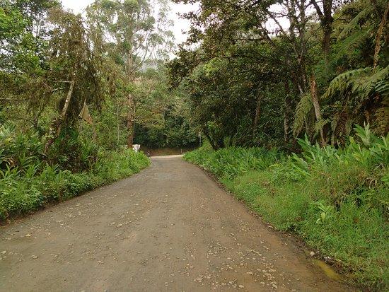 Valle del Cauca Department, كولومبيا: Tocotá - Valle del Cauca, puedes respirar aire puro!