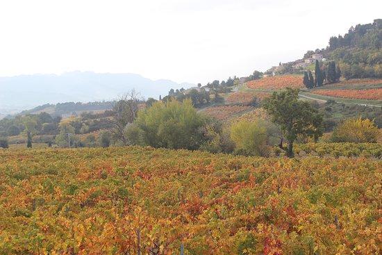 Vue depuis les vignes en direction de Rasteau
