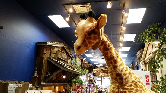 The Jackson Hole Toy Store
