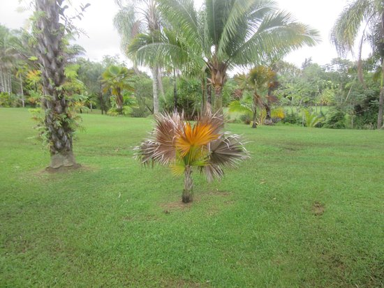 Silver Falls Ranch Palm Trees