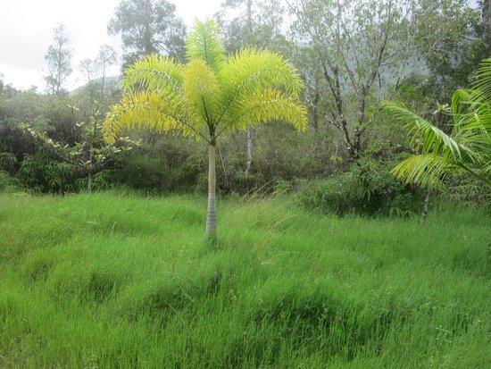 Kilauea 사진