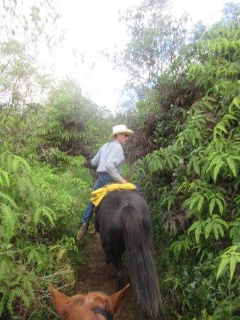 Kilauea, HI: Silver Falls Ranch Greg Instructing