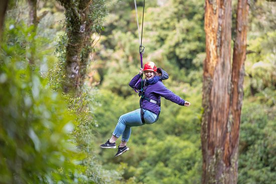 Rotorua Canopy Tours: Fun in nature